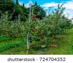 apple orchard  red apple on tree | Shutterstock . vector #724704352