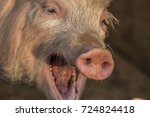 Laughing Happy Pink Pig With...