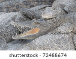 Teeth of Crocodile - stock photo