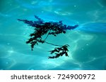 seaweed in the sea | Shutterstock . vector #724900972