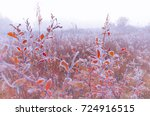 autumn leaves in the morning...   Shutterstock . vector #724916515