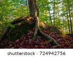 Birch Tree Growing On A Rock I...
