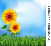 Two Yellow Sunflowers On The...