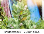 colorful bird  bay headed bee...   Shutterstock . vector #725045566