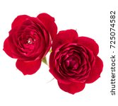 two red rose flower  isolated... | Shutterstock . vector #725074582