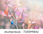 colors of autumn. blueberries... | Shutterstock . vector #725099842