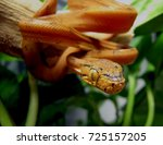 orange snake with leaves in... | Shutterstock . vector #725157205
