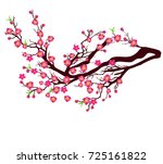 vector cherry blossom for...