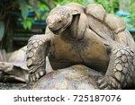 african spurred tortoises... | Shutterstock . vector #725187076
