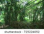 bamboo | Shutterstock . vector #725226052