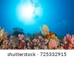 beautiful coral | Shutterstock . vector #725332915