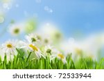 daisywheel much with green leaf ... | Shutterstock . vector #72533944