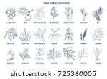 best herbal remedies for... | Shutterstock .eps vector #725360005