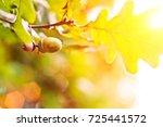green oak acorn on an oak... | Shutterstock . vector #725441572