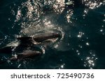 encounter with long finned... | Shutterstock . vector #725490736