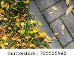 Yellow Fallen Autumn Leaves On...