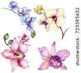 wildflower orchid flower in a... | Shutterstock . vector #725595652