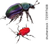 exotic beetle wild insect in a... | Shutterstock . vector #725597608
