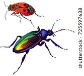 exotic beetle wild insect in a... | Shutterstock . vector #725597638