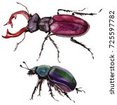 exotic beetle wild insect in a... | Shutterstock . vector #725597782