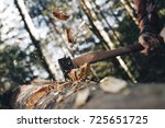 brutal lumberjack cuts forest... | Shutterstock . vector #725651725