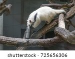 anteater sitting on a branch... | Shutterstock . vector #725656306