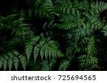 green leaves background. green...   Shutterstock . vector #725694565