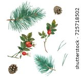 Watercolor Set Of Pine Branche...