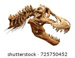 skeleton of tyrannosaurus rex   ... | Shutterstock . vector #725750452