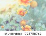 flower  zinnia  zinnia violacea ... | Shutterstock . vector #725758762