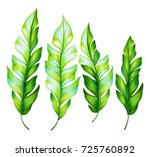 set of tropical leaves isolated ... | Shutterstock . vector #725760892