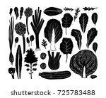 hand drawn salad greens and... | Shutterstock .eps vector #725783488