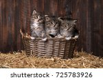 Adorable Kittens With Straw In...