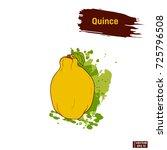 vector image. ripe apple quince ... | Shutterstock .eps vector #725796508