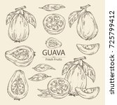 collection of guava  guava... | Shutterstock .eps vector #725799412
