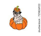 dog. puppy pug. halloween... | Shutterstock .eps vector #725826922
