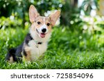 welsh corgi enjoy and sitting... | Shutterstock . vector #725854096