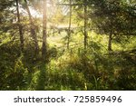 into the forest. nature... | Shutterstock . vector #725859496