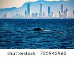 humpback whale in front of gold ... | Shutterstock . vector #725942962