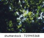 green japanese maple leaves... | Shutterstock . vector #725945368