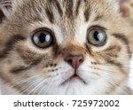 cute tabby cat kitten portrait... | Shutterstock . vector #725972002