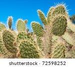 Cactuses In Peruvian Desert