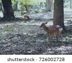 japan's famous nara deer. sika... | Shutterstock . vector #726002728