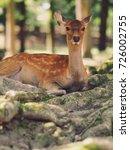 japan's famous nara deer. sika... | Shutterstock . vector #726002755