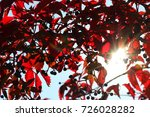 sun is shinning through wild... | Shutterstock . vector #726028282