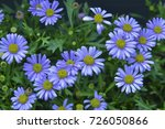 daisies are simple yet... | Shutterstock . vector #726050866