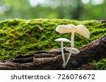 white mushroom on green moss in ... | Shutterstock . vector #726076672