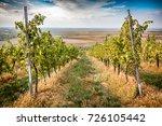 a grape wine yard with green...   Shutterstock . vector #726105442