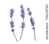 set of lavender branches....   Shutterstock .eps vector #726118765