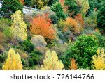 trees with red  yellow and... | Shutterstock . vector #726144766